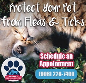 Protect Your Pets at Animal Medical Center
