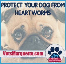 Protect Your Dog From Heartworm
