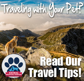 Travel Safely With Your Pets
